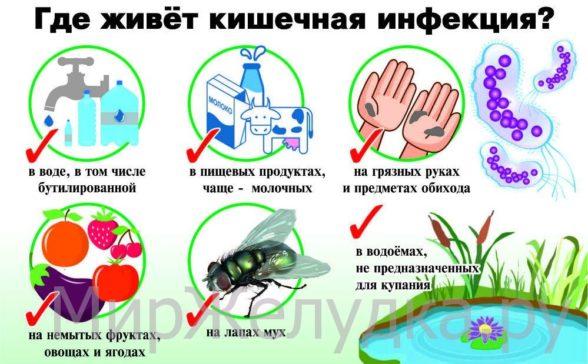 где развивается кишечная инфекция