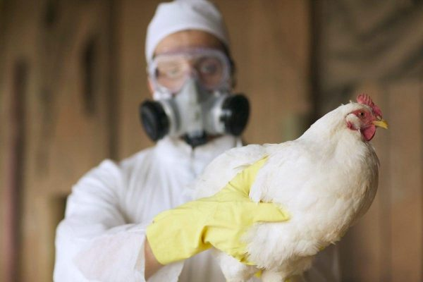 Птичий грипп и COVID-19